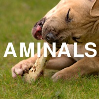 Aminals -- Animals. Those which aren't Milo.