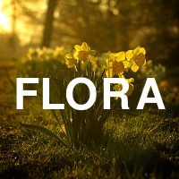 Flora -- Things that come out of the ground.