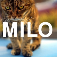 Milo -- The best cat to ever have lived, who passed away in November 2008. RIP.