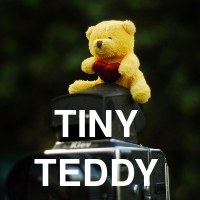 The adventures of a tiny teddy -- In which I photograph a very small teddy bear.