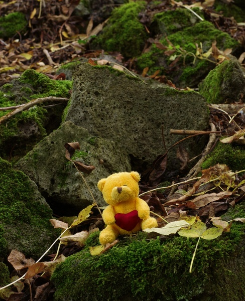 Tiny teddy on the rocks